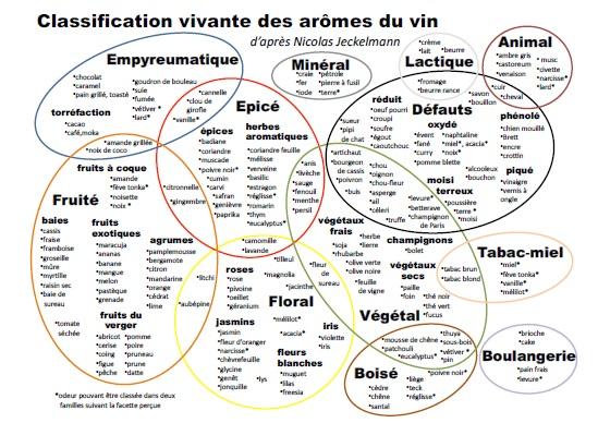 classification-du-vin